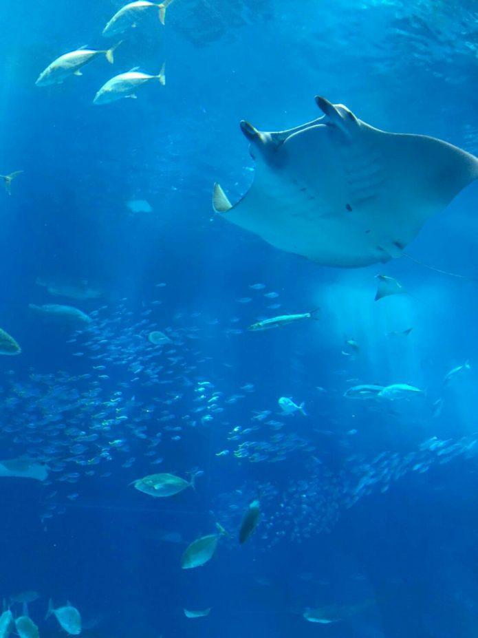 沖縄 美ら海水族館 のあレクレーション