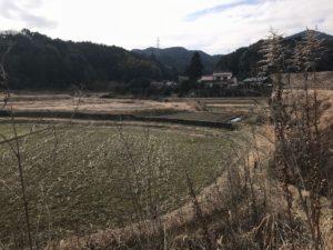 ちからの 筑紫野市萩原の畑