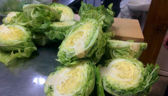 本日の収穫野菜 キャベツ
